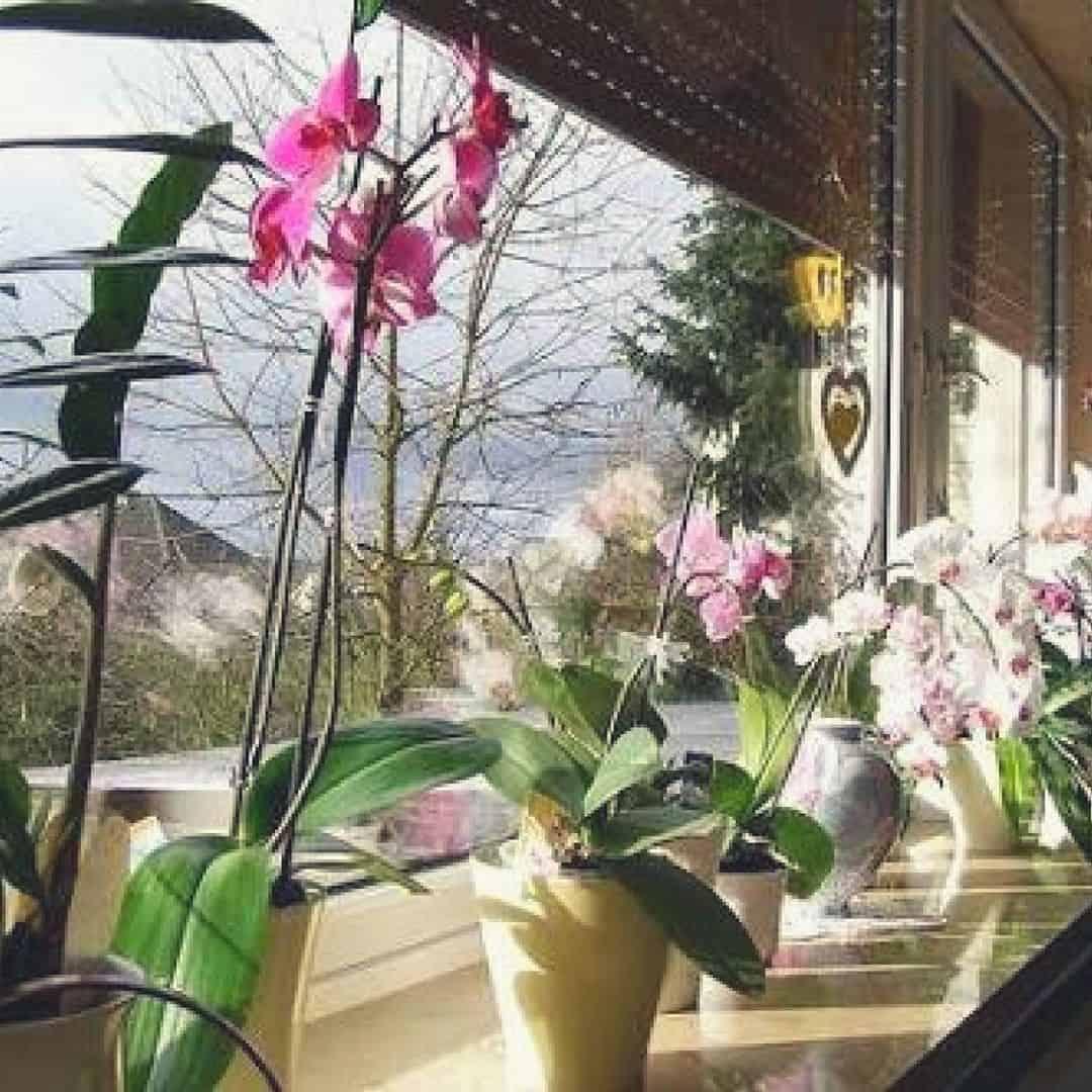 como cuidar de orquídeas ema partamento: sugestão de espécies