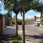 Palmeira Real 3