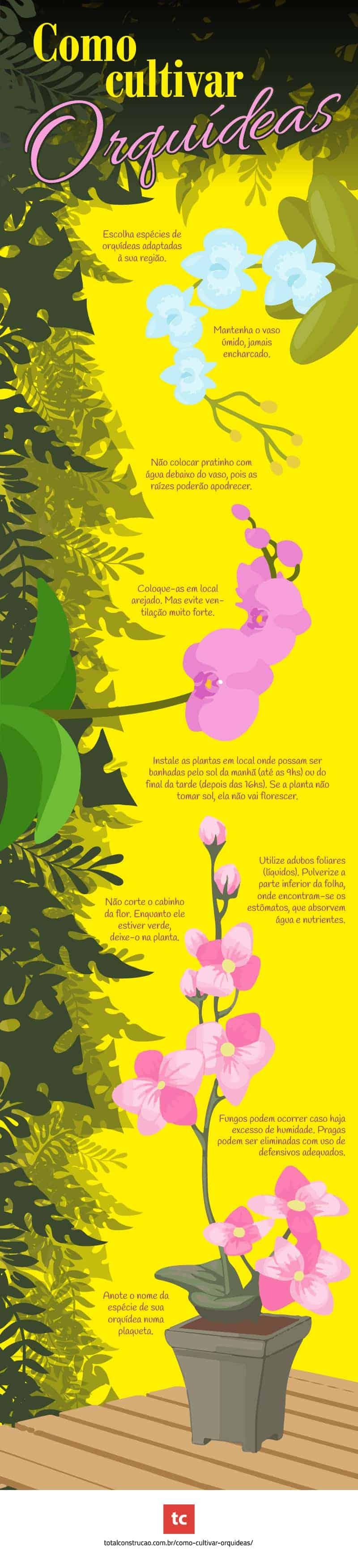 infografico de orquidea