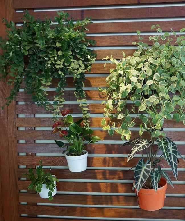 Resultado de imagem para jardim vertical Plantação em pallet
