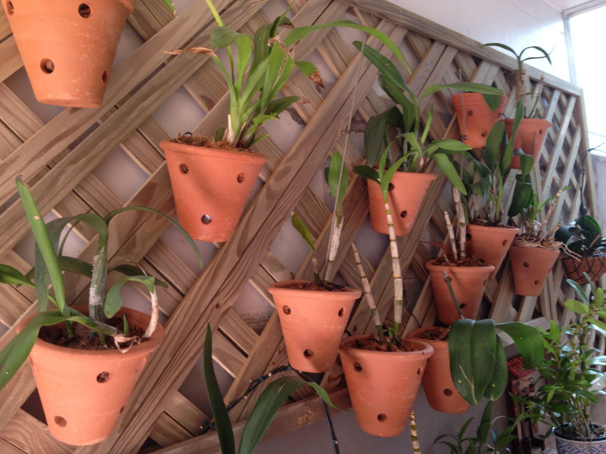 vaso de barro para orquídeas