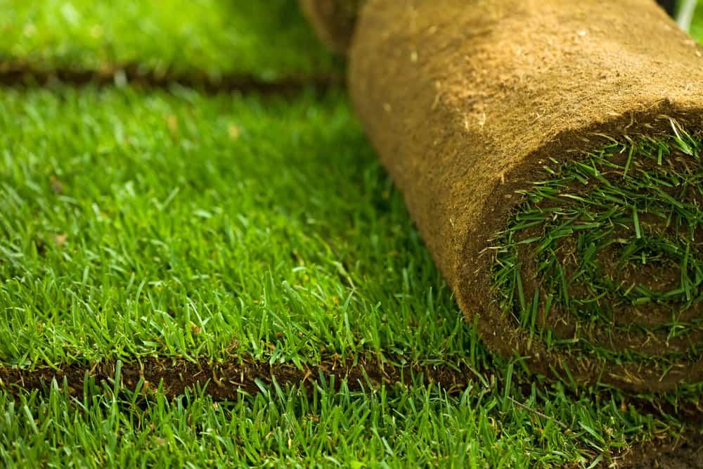 rolo-para-plantar-grama-esmeralda