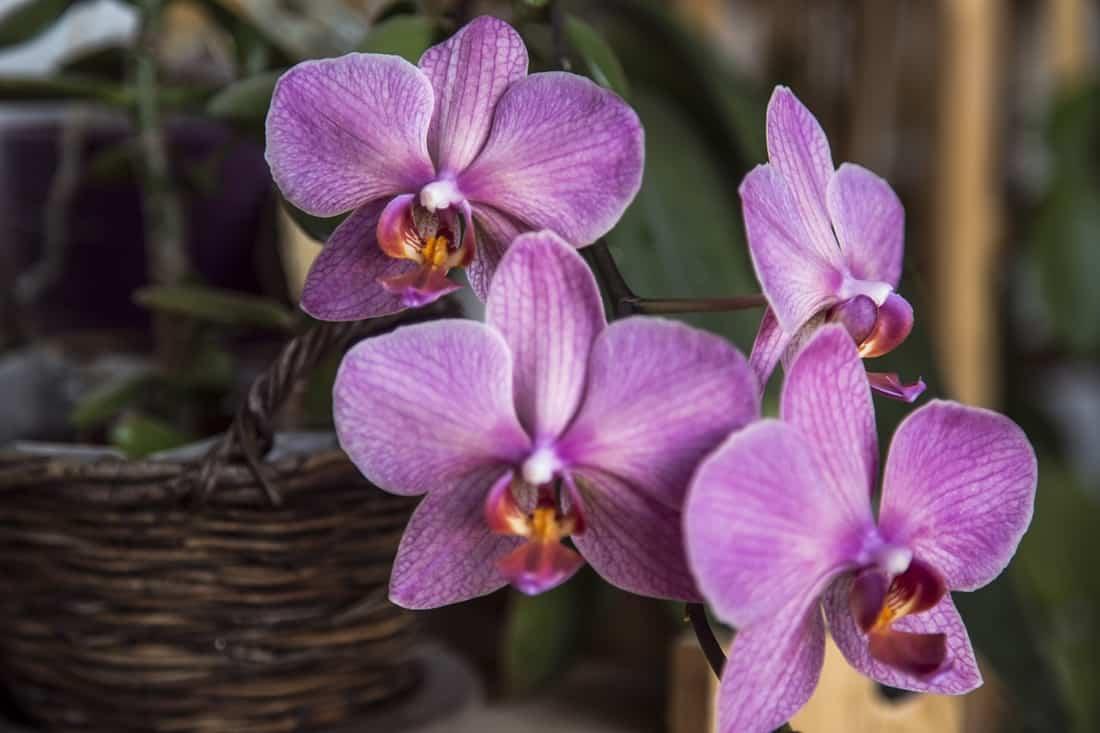 Cada substrato irá influenciar na forma de como regar orquídeas.