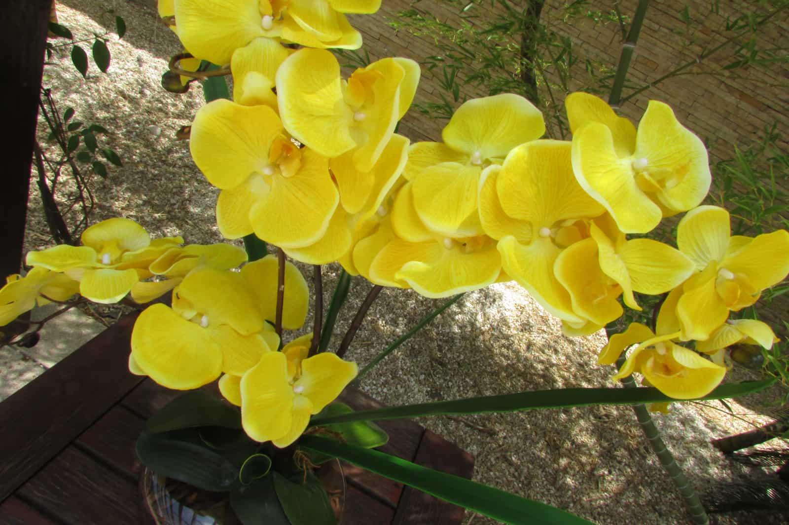 A umidade relativa do ar influencia em como regar orquídeas.