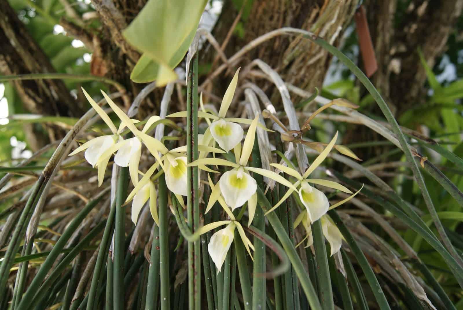 É fácil entender como identificar orquídeas pelas folhas de diferentes espécies.
