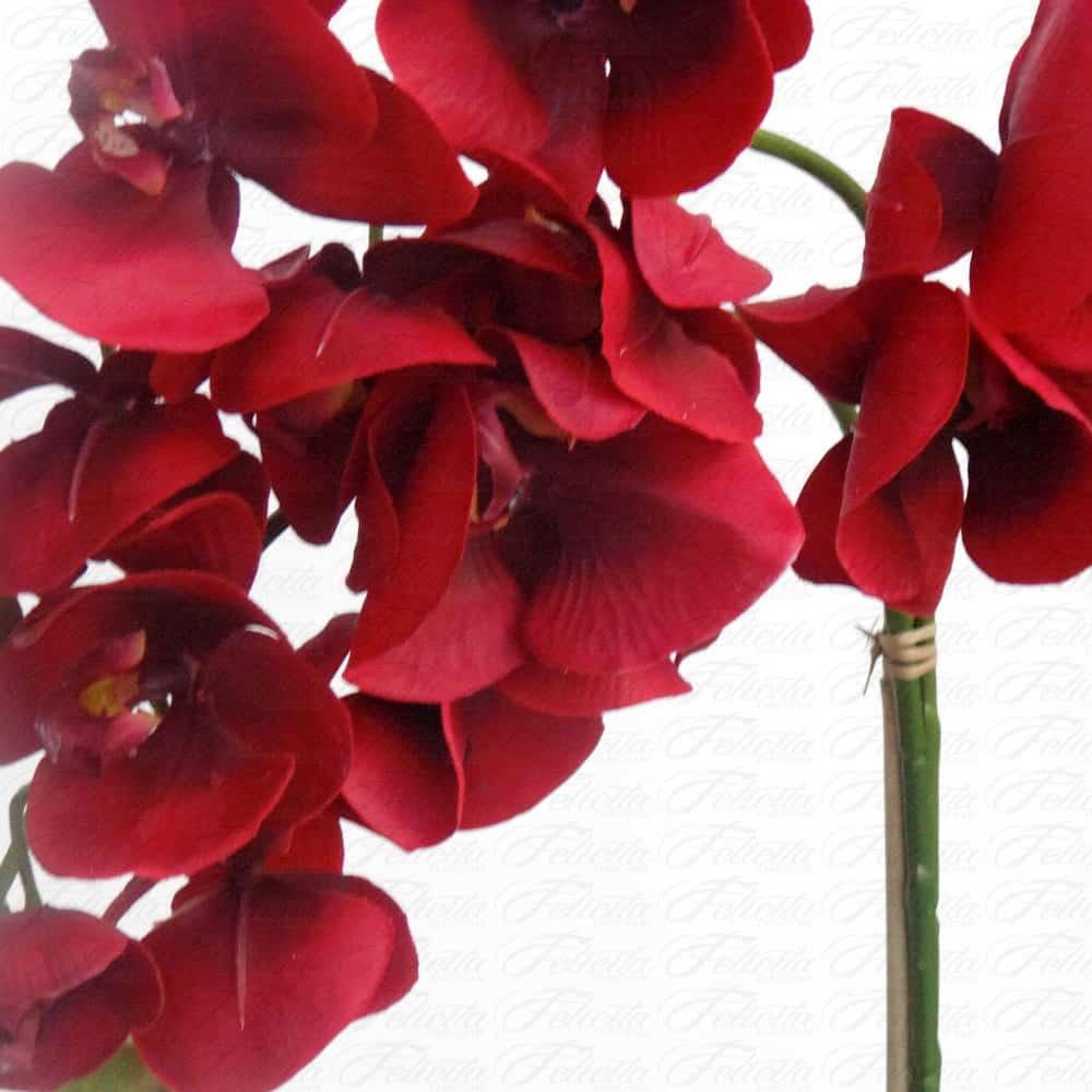 O cultivo das orquídeas vermelhas não é fácil.