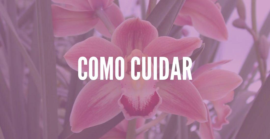 Como cuidar de Orquídeas Terrestres