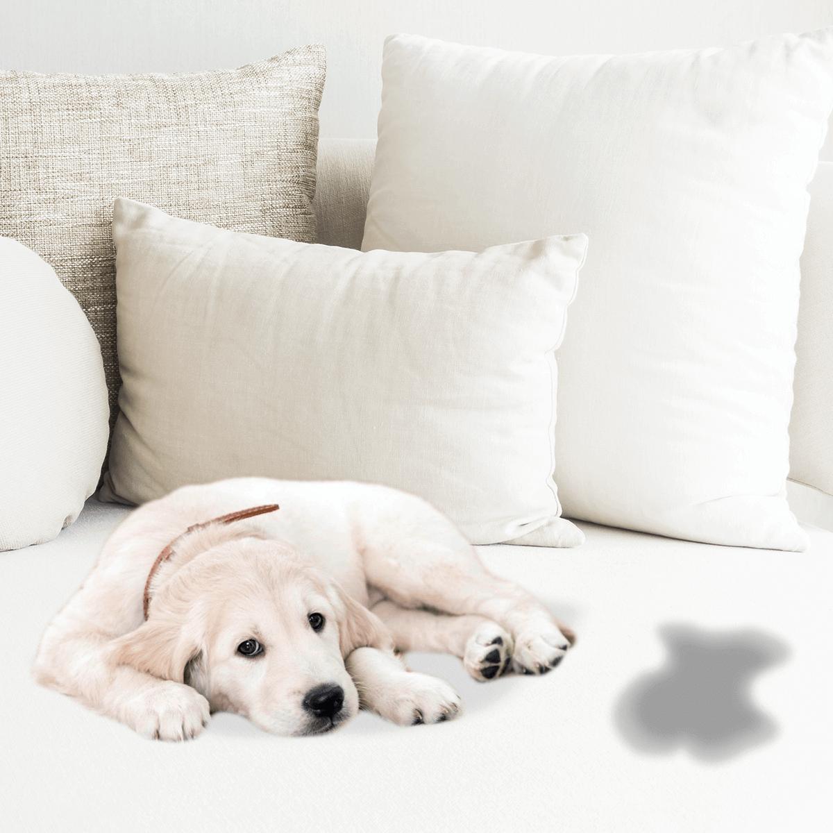 Dá pra aprender como tirar cheiro de xixi do sofá e do colchão de forma fácil.