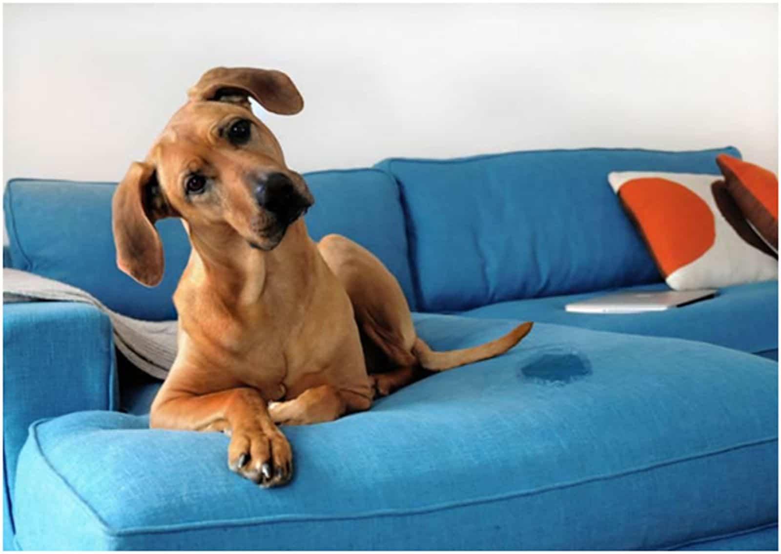 como tirar cheiro de xixi do sofá, colchão e outros móveis