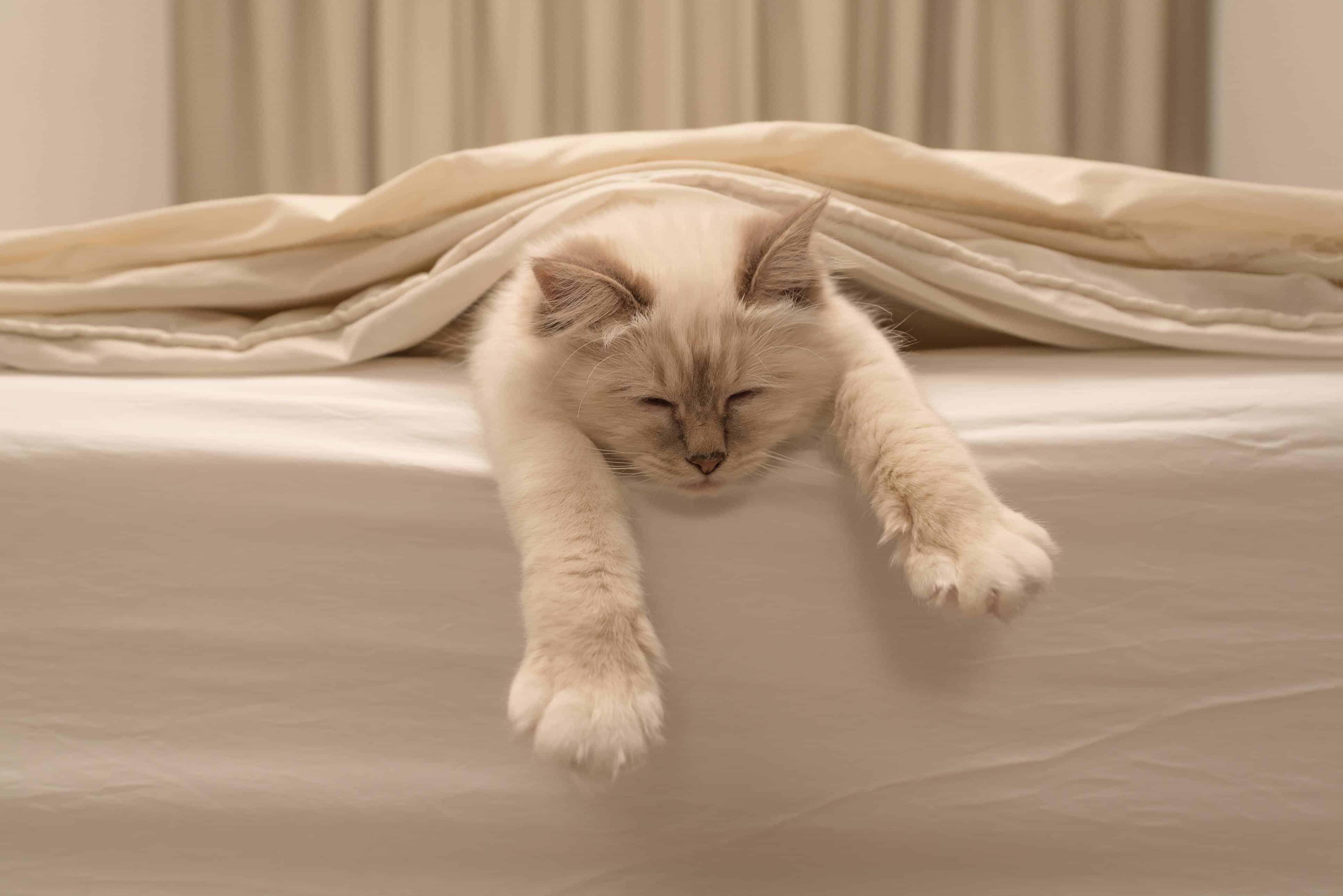 É fácil aprender como tirar cheiro de xixi do sofá e do colchão.