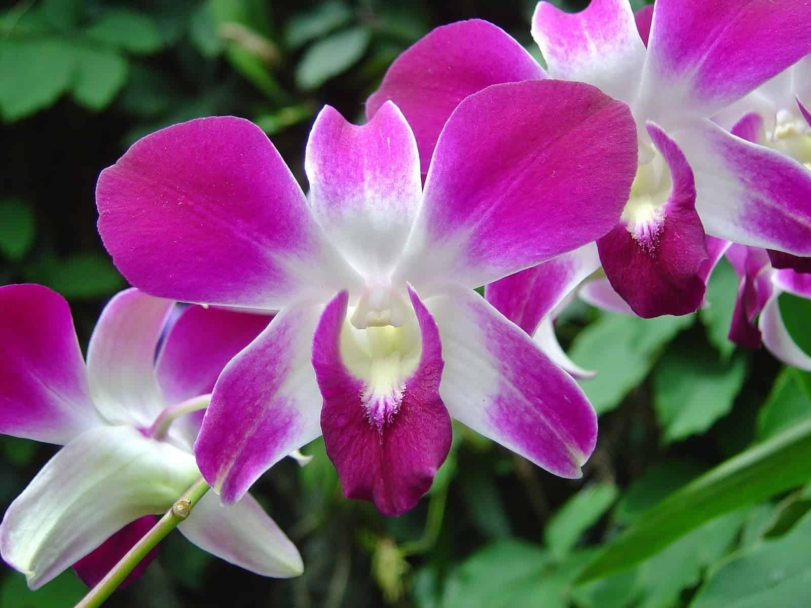 orquídeas epífitas