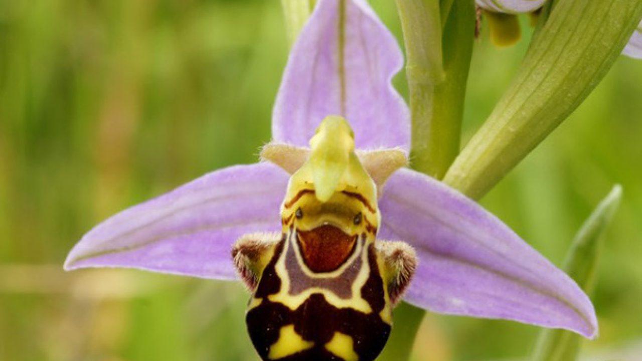 orquídeas raras e exóticas