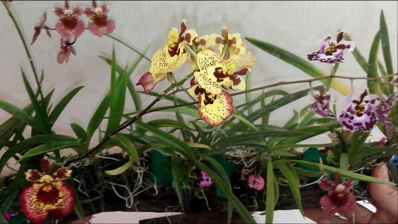orquídeas em troncos