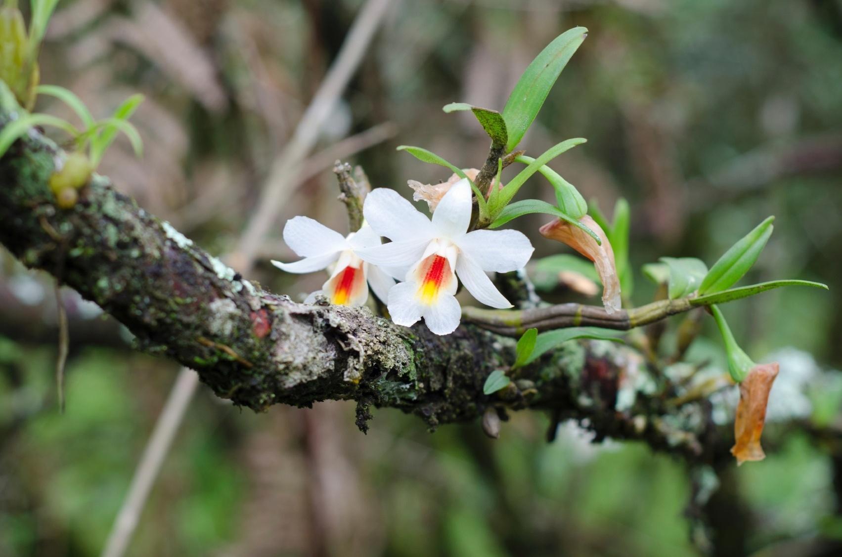 É possível cultivar orquídeas em troncos simulando o seu habitat natural.
