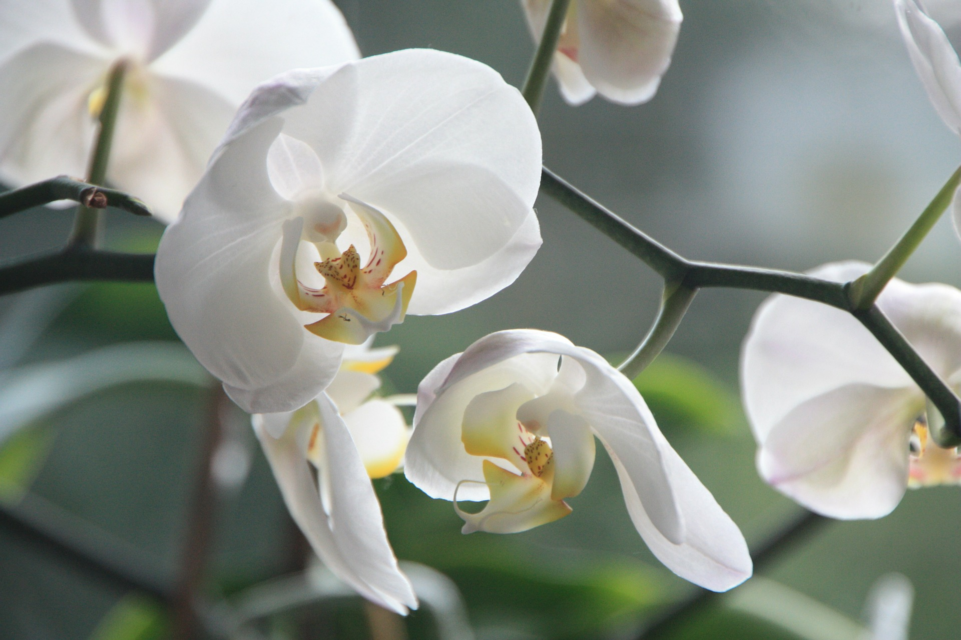 É preciso entender como replantar orquídeas no tempo certo.
