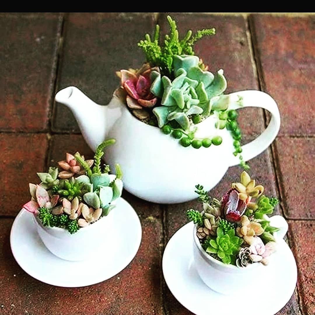 Espécies de suculentas plantadas dentro de um jogo de chá.
