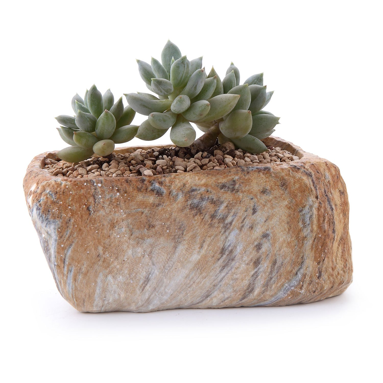 Espécies de suculentas plantadas em aberturas em pedras.