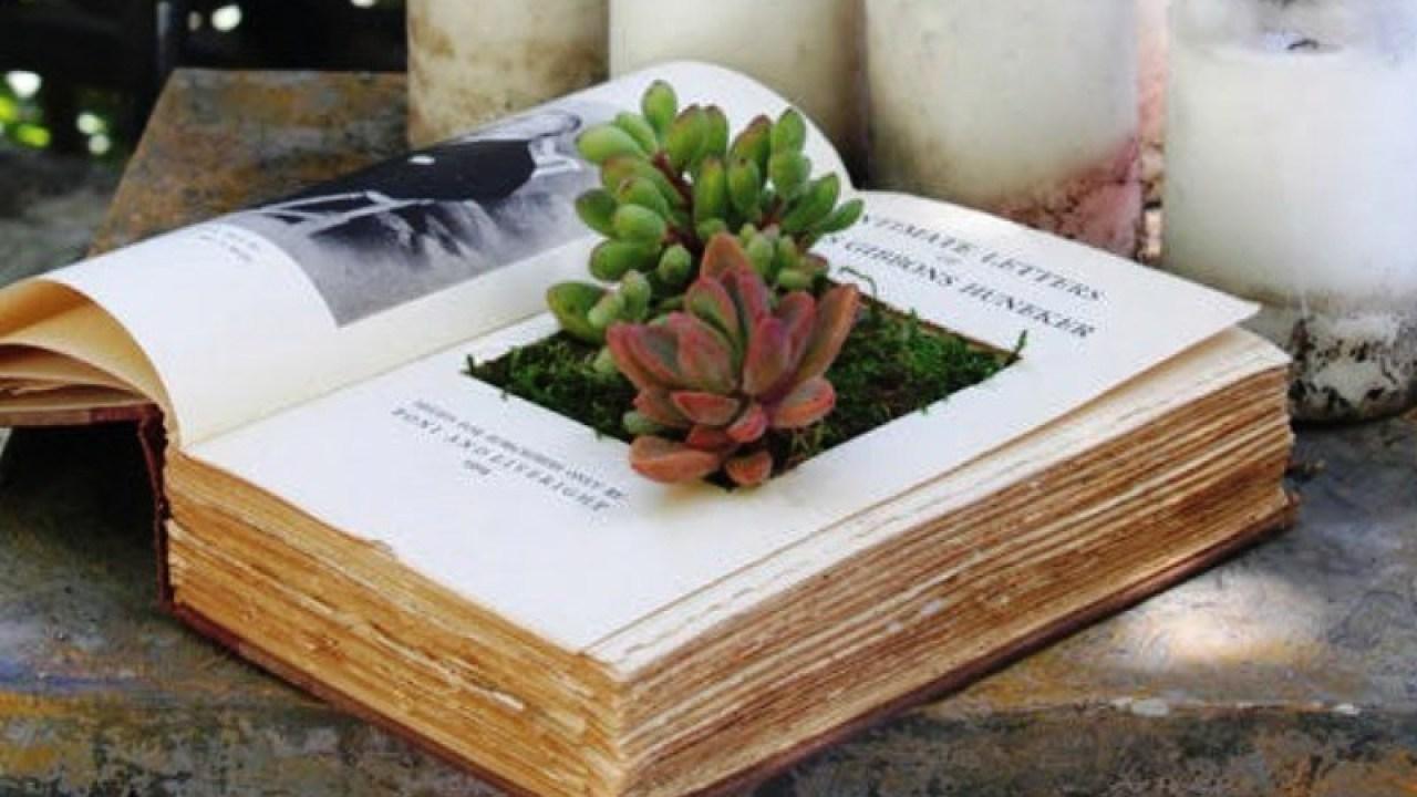 Espécies de suculentas plantadas dentro de um livro antigo.