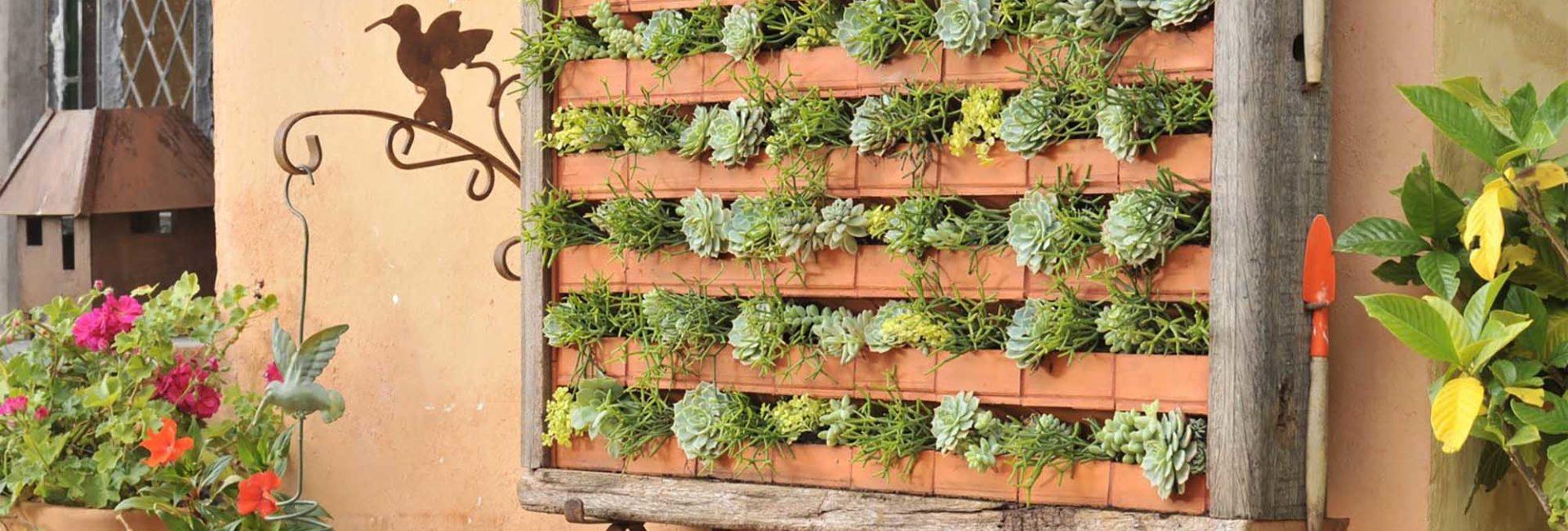 Espécies de suculentas em canteiros em jardim vertical.