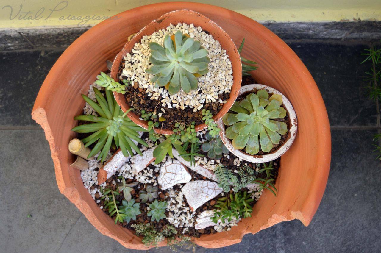 Espécies de suculentas plantadas em vasos de crâmicas quebrado e em vários níveis.