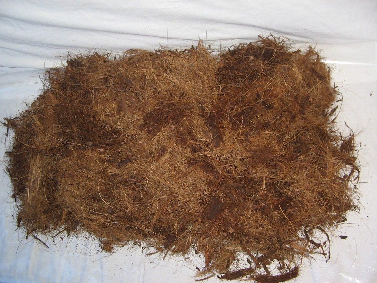 fibra de coco: substrato para orquídeas
