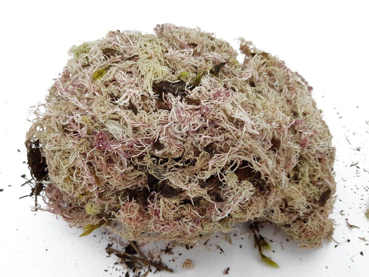 O esfagno é um tipo de musgo utilizado como substrato para orquídeas.