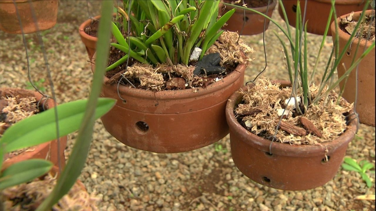 substrato pra orquídeas vasos de cerâmica