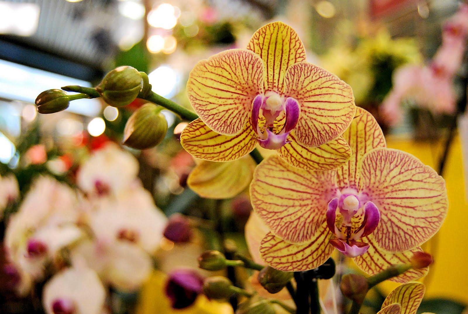 borra de café nas orquídeas: adubo
