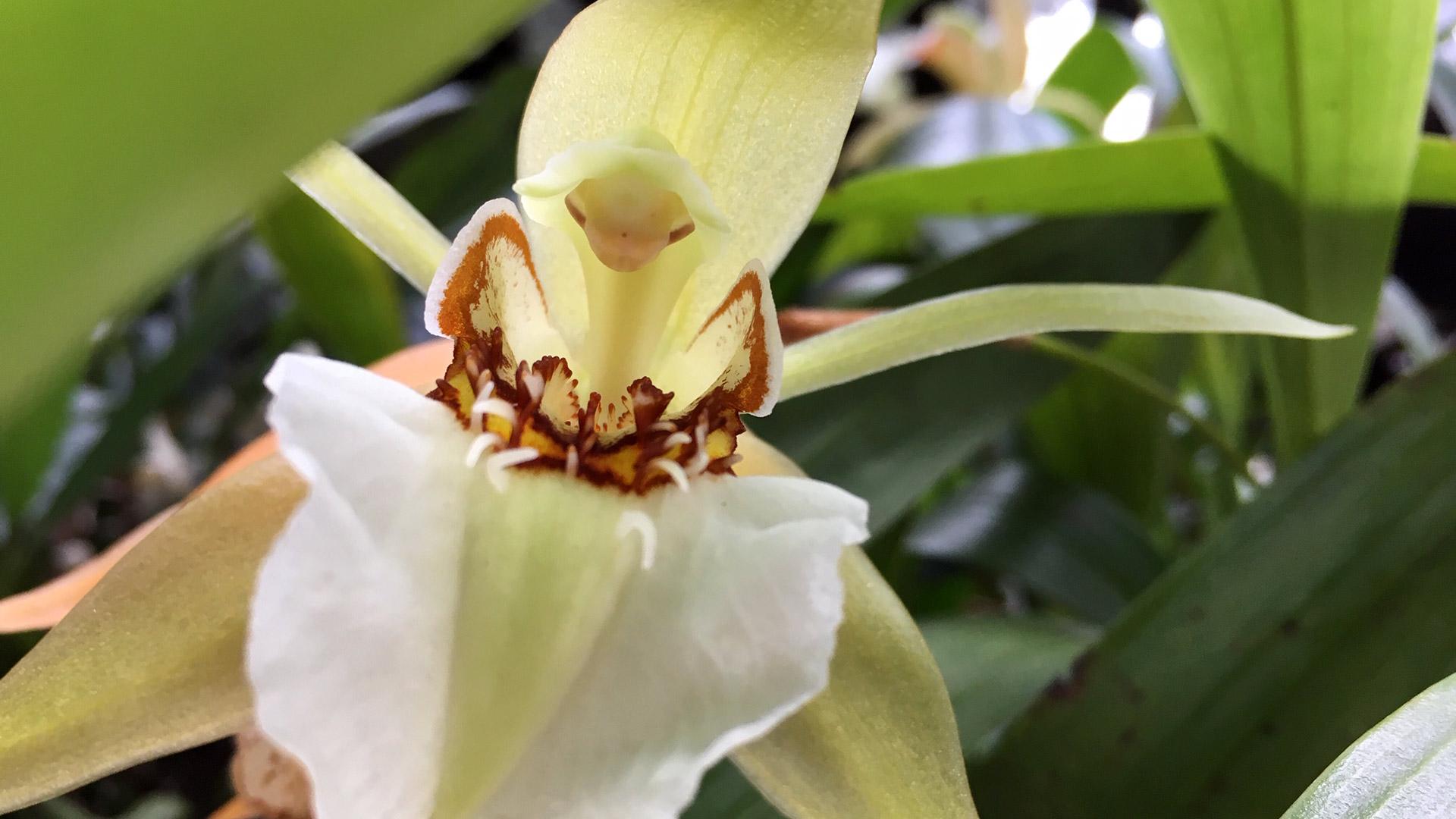 minha orquídea está morrendo por excesso de água