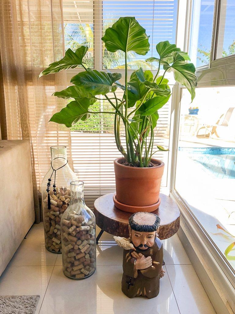 plantas para dentrod e casa Filodendro ondulado