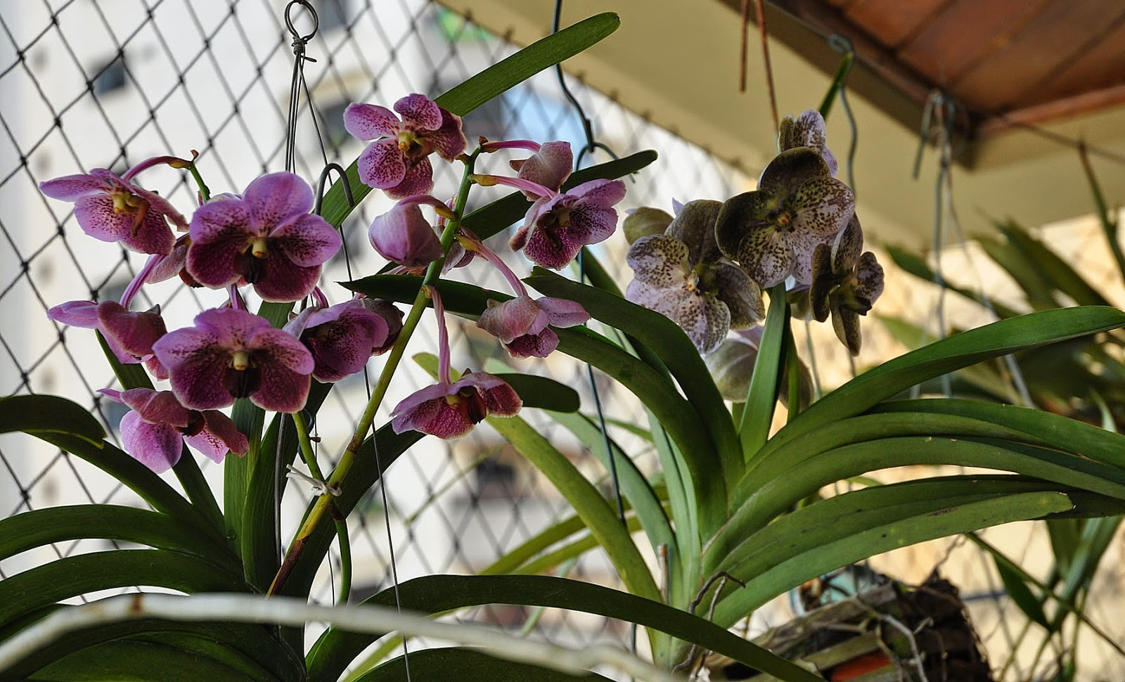 plantas para dentro de casa Orquídea