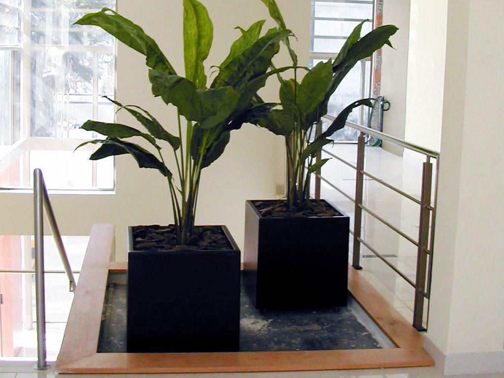plantas para dentro de casa ciclanto