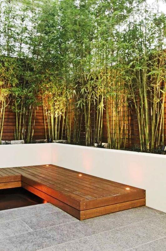 Bambu Japonês