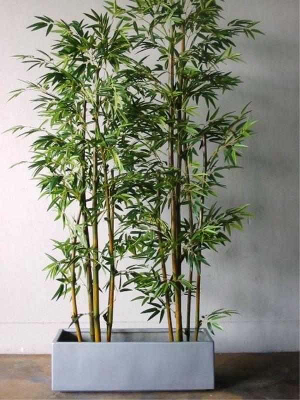 Bambu para vaso