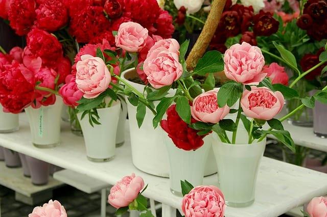 como cuidar de rosas vasos da flor
