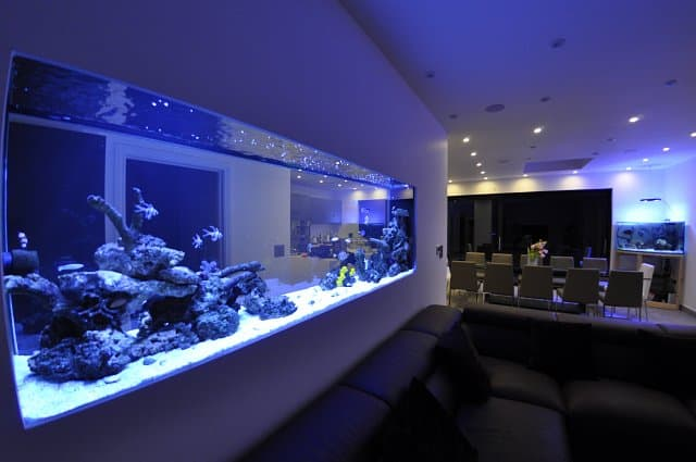 aquario na parede inteira
