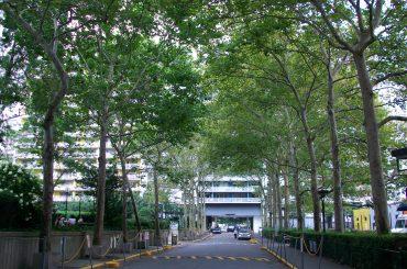 arborização ruas