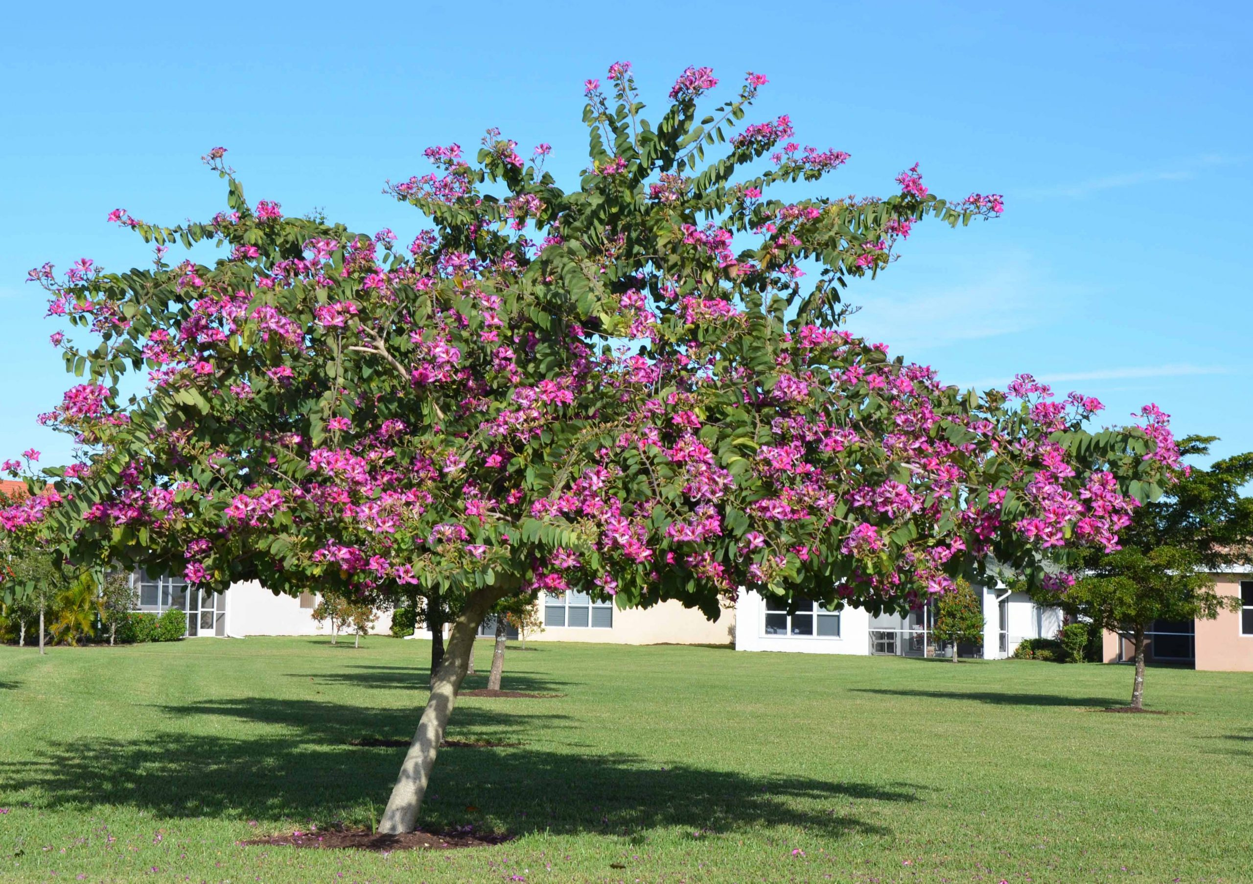 flores arborização