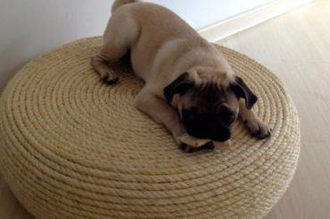 puff de pneu com cachorro deitado em cima